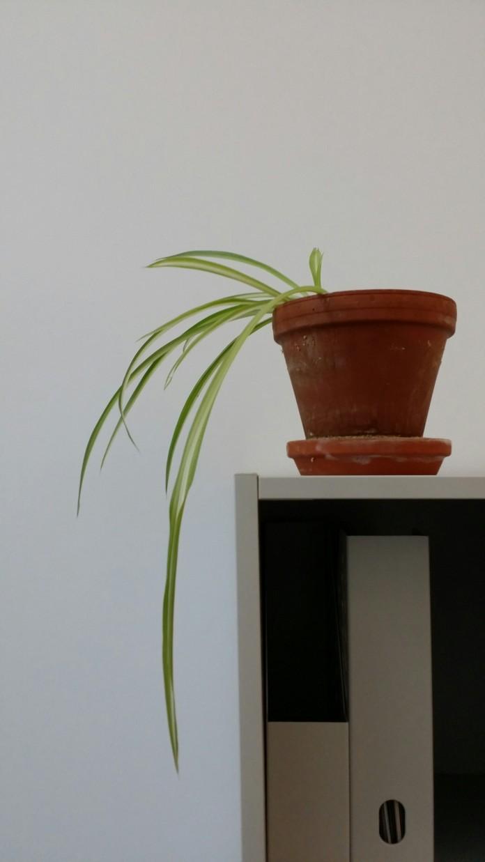 besser konzentrieren pflanzen am arbeitsplatz karrieref hrer. Black Bedroom Furniture Sets. Home Design Ideas