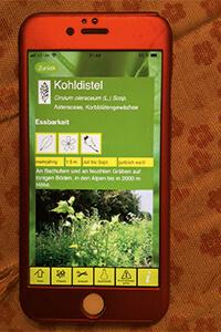 App Tipp Essbare Wildpflanzen